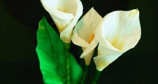 Calla Lily Paper Craft - Flower Craft Ideas - Easy Peasy and Fun | 165x310