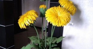 Best 8 Paper flower – Page 359373245264126795 – SkillOfKing.Com